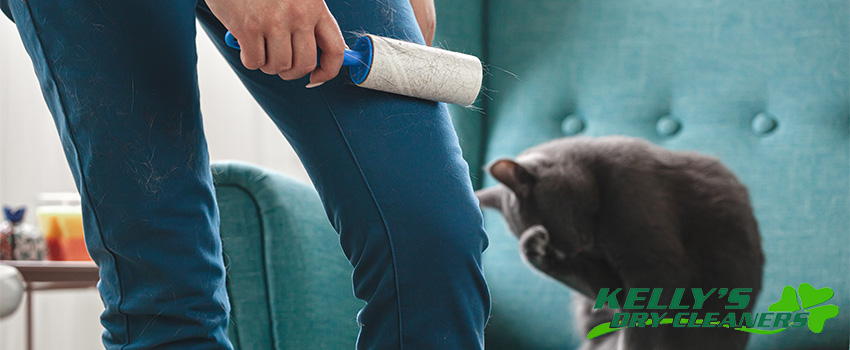 Tips for Cleaning Pet Hair and Odors At Home